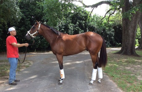 Full brother to Get Stormy on his way to Belmont